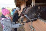 konie szlot
